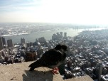 I didn't take too many pictures that day because we all looked as bulky as this bird. It was New York last winter and it was cold. Big coats do not make for svelte looking girls.