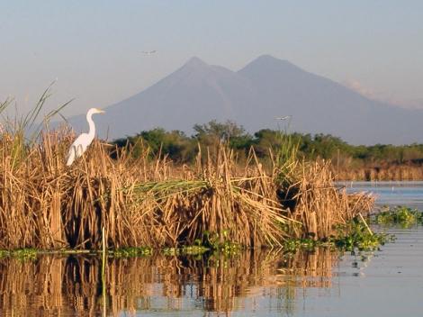 Crane in Monterrico, Guatmela