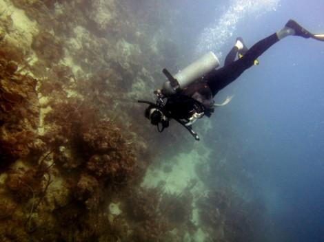 Scuba diving off Utila, Honduras
