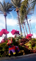 2016 - Scottsdale - Sharkie with Palms